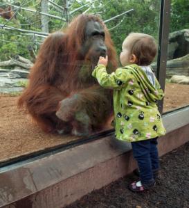 San Diego Zoo January 1 2014