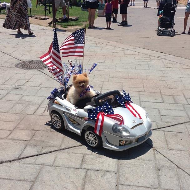 4th of July Dog Parade - Photo credit Sergio Marmolejo @shango1120