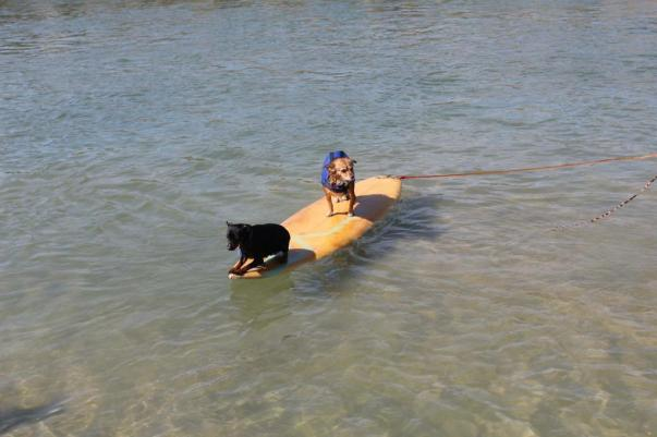 Sunshine and Sadie surfing - Photo credit Esmeralda Robles Art @SDart619